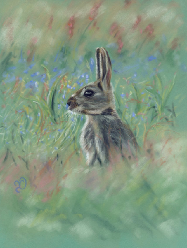Meadow Rabbit