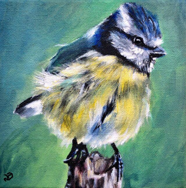 Blue Tit. Acrylic painting by North Yorkshire artist Vicki Davidson