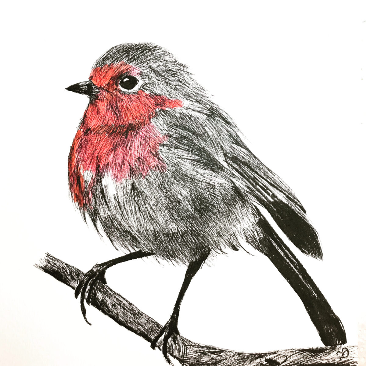 Ink Robin. Original ink drawing by North Yorkshire artist Vicki Davidson