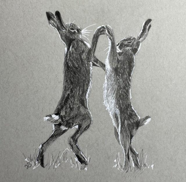 Boxing Hares. Hare art. Ink drawing. Vicki Davidson