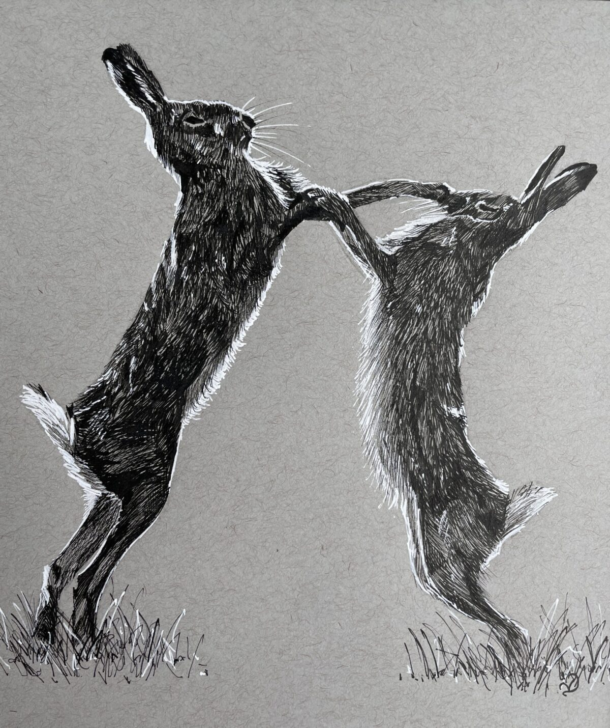 Is there a local artist in Bedale? Boxing Hares. Ink Drawing by Vicki Davidson