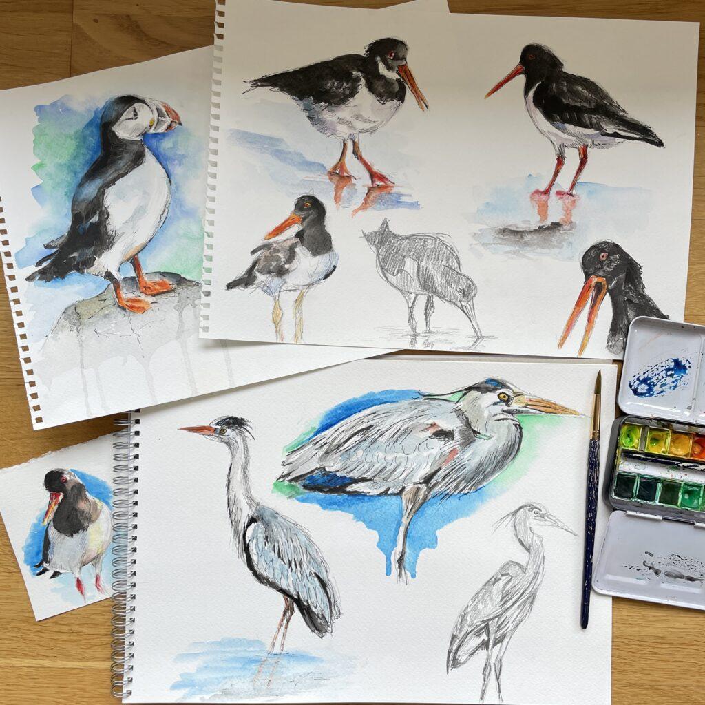 Watercolour sketches seabirds